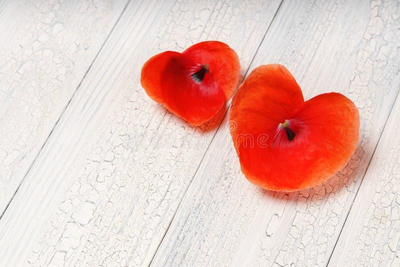 Zwei Herzen von den roten Blumenblumenblättern im Herzen formen über weißes Holz stockbilder