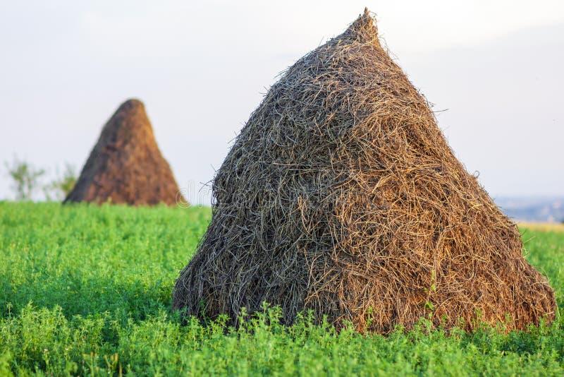 Zwei Heuschober und grünes Gras an einem sonnigen Tag stockfotos