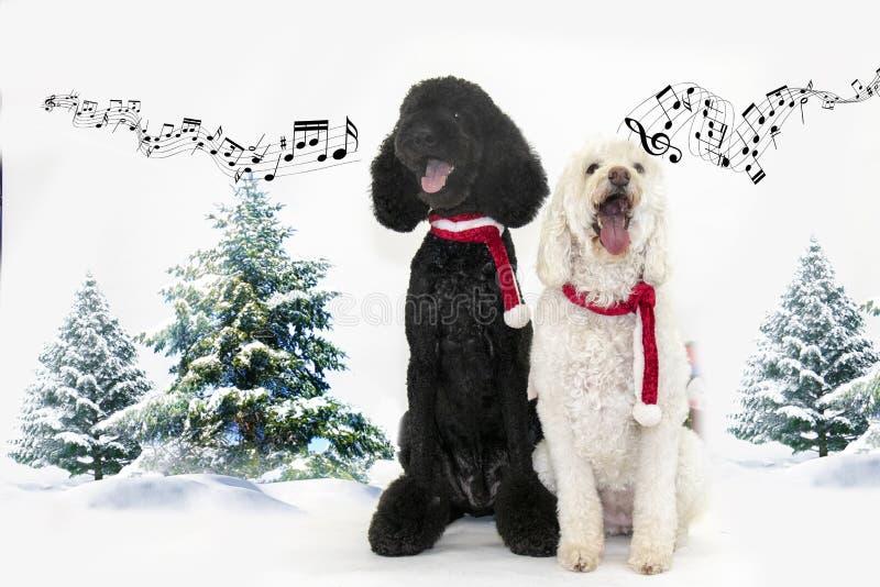 Zwei Hunde singen im Schnee lizenzfreie stockfotografie
