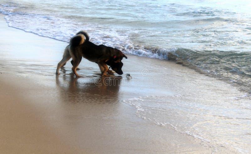 Zwei Hunde und s-Krabbe stockfoto