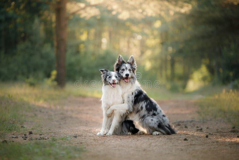 Zwei Hundeumarmung Haustier draußen lizenzfreie stockfotos