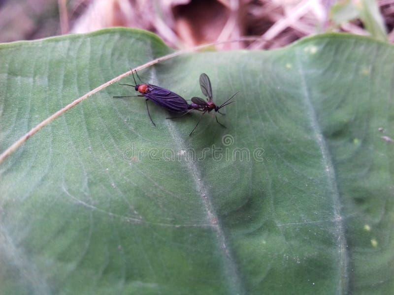 zwei insekten stockbild bild von blatt abschluß