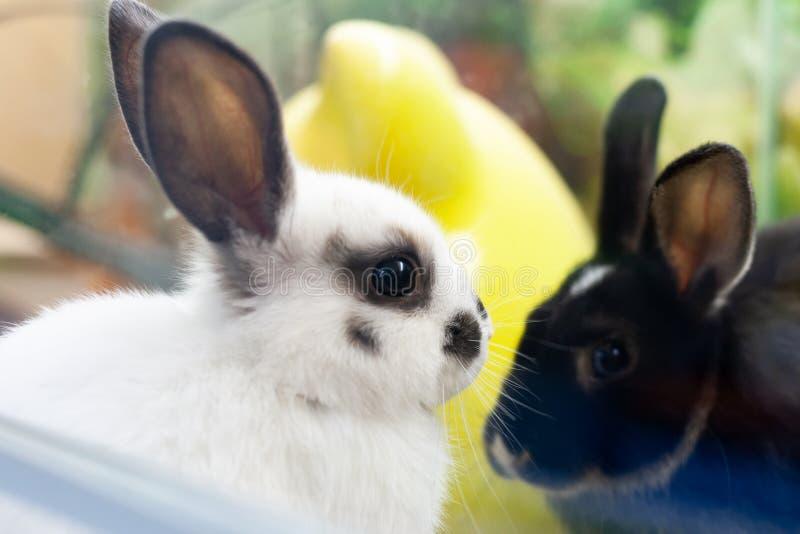 Zwei junge Kaninchen am Zoomarkt weiße und schwarze Haustiere lizenzfreies stockbild