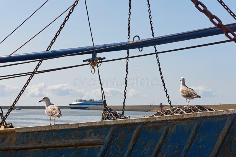 Zwei junge Seemöwen auf einem alten Fischerboot lizenzfreie stockfotos