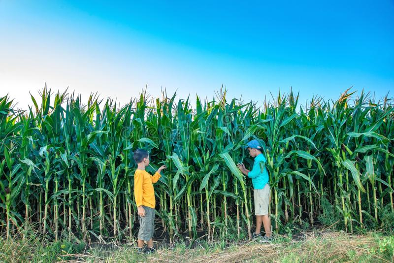 Zwei Jungen gehen über das Feld mit Körnern stockfotos