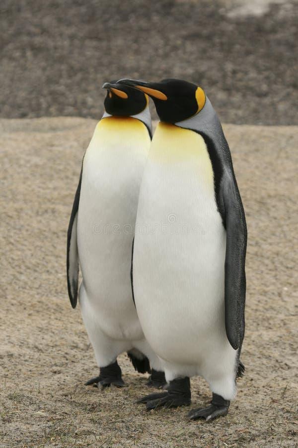Zwei König Penguins lizenzfreie stockbilder