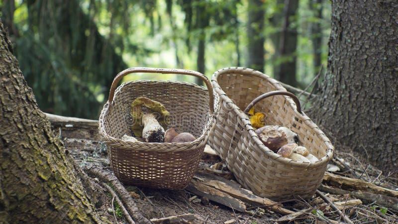Zwei Körbe voll von Pilzen lizenzfreie stockfotos