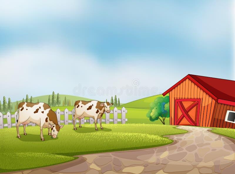 Zwei Kühe am Bauernhof mit einer Scheune und einem Zaun vektor abbildung
