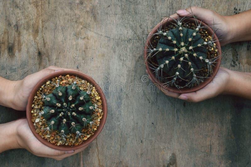 Zwei Kaktus und vier Hände stockbild