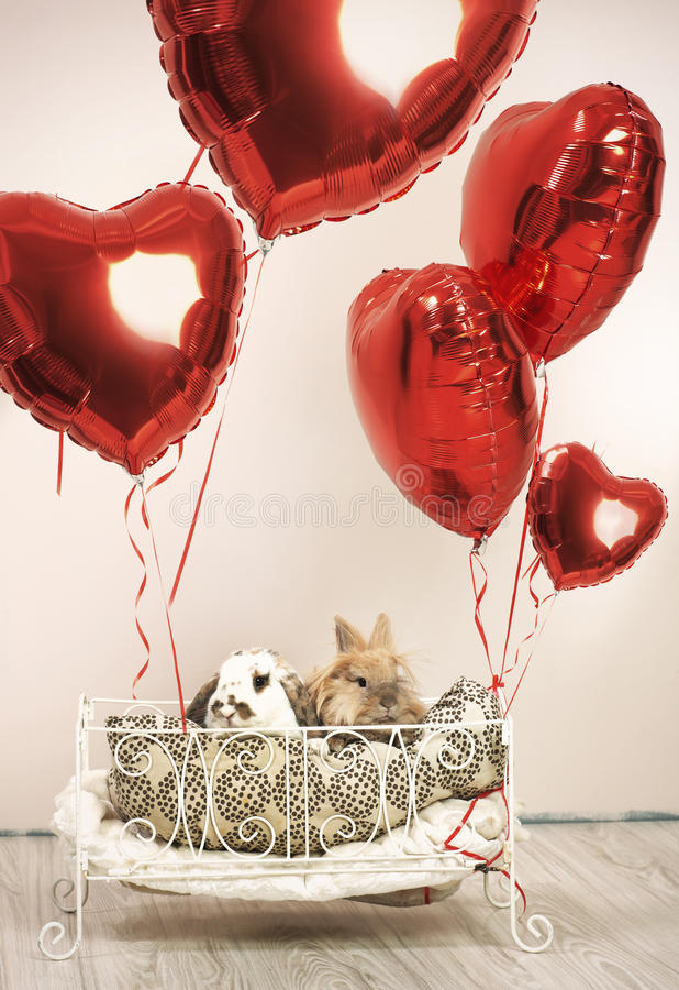 Zwei Kaninchen in der romantischen Szene mit Ballonen stockfotos