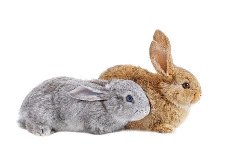 Zwei Kaninchen lokalisiert auf weißem Hintergrund stockfoto