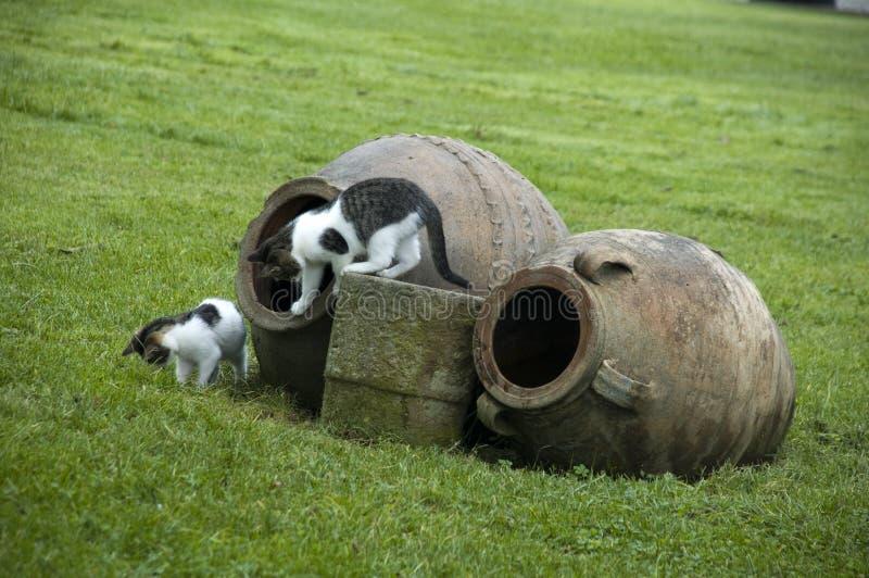Zwei Katzen stockfotos