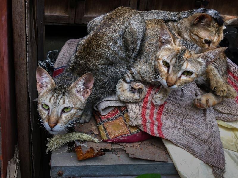 Zwei Katzen, Die Zur Kamera Mit Wachsamem Auge Schauen