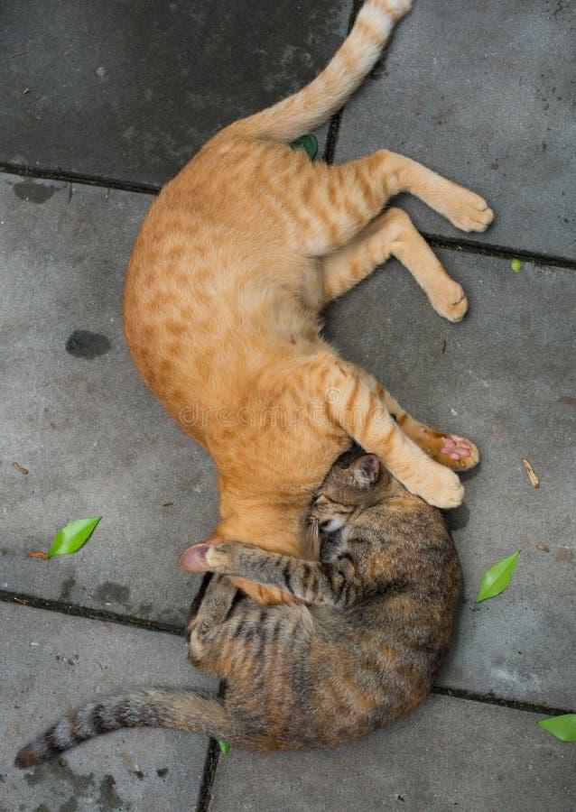 Zwei Katzen-Kämpfen stockbilder