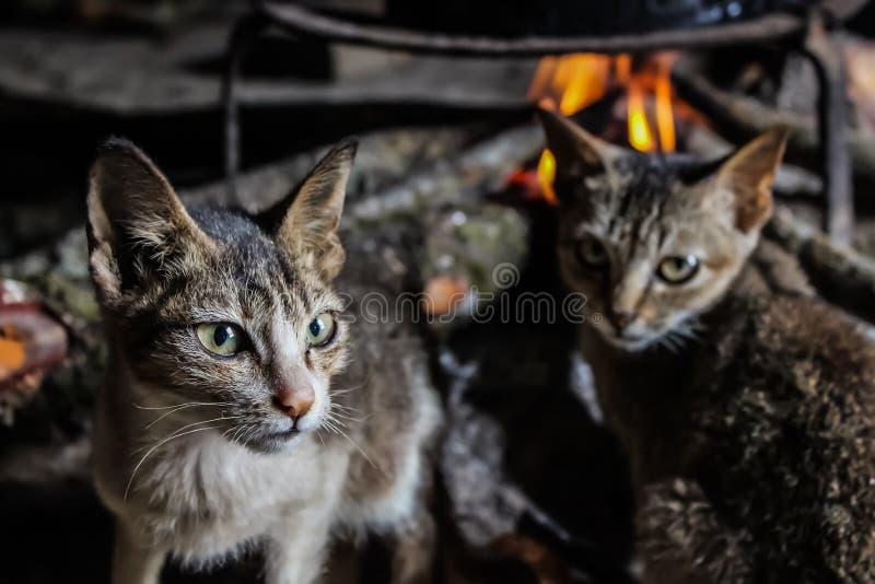 Zwei Katzen und Feuer lizenzfreie stockfotos