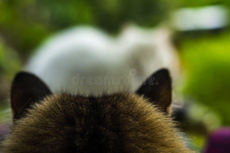 Zwei Katzen Weiß und Farbe lizenzfreies stockfoto