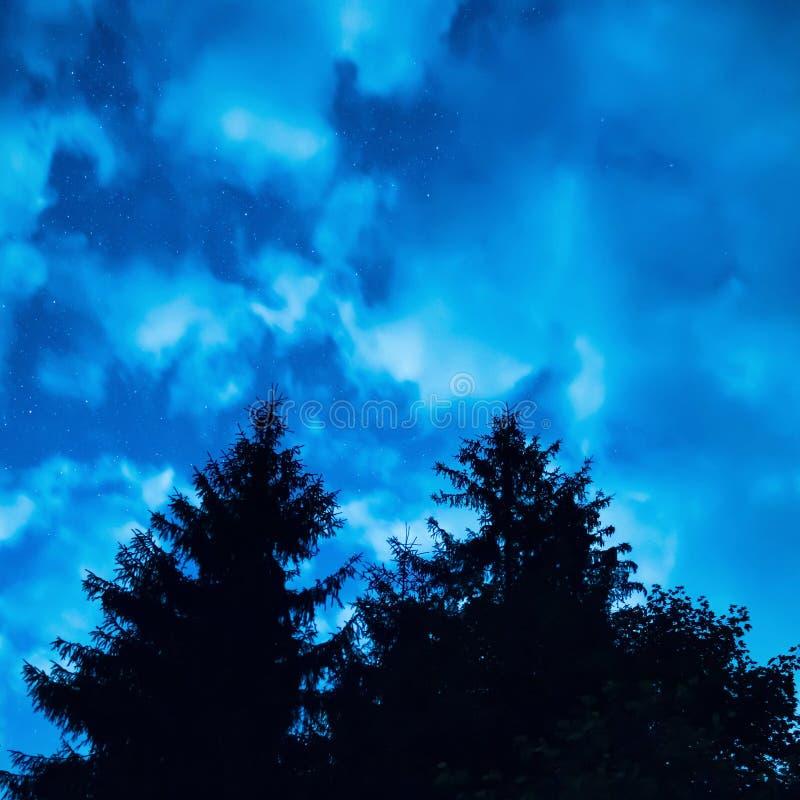 Zwei Kiefer unter blauem nächtlichem Himmel lizenzfreies stockfoto