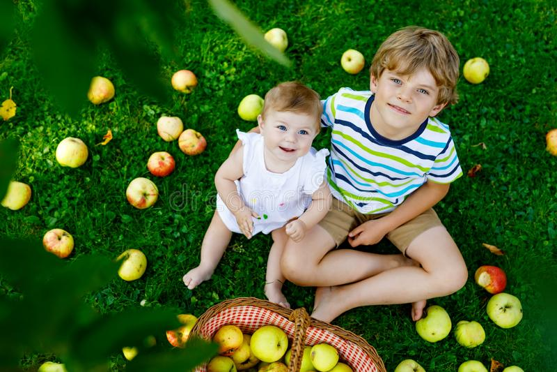 Zwei Kinder, die Äpfel auf einem Bauernhof im Frühherbst auswählen Kleines Baby und Junge, die im Apfelbaumobstgarten spielt Kind lizenzfreies stockfoto
