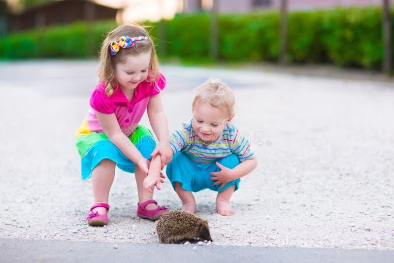 Zwei Kinder, die ein Igeles aufpassen stockfotos