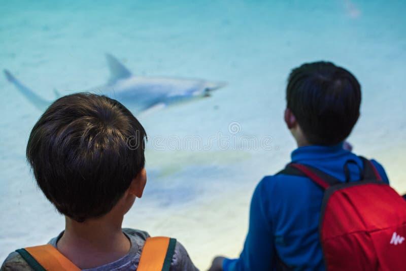 Zwei Kinder passen einen Haifisch am Aquarium auf stockbild