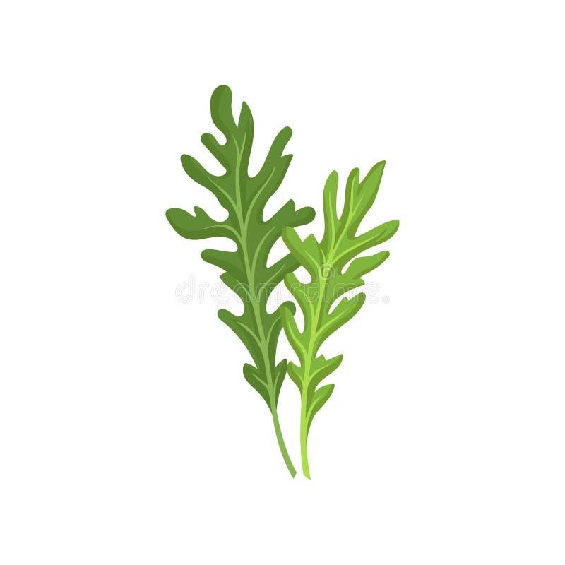 Zwei kleine grüne Raketenblätter Frischer Arugula Natürlicher Bestandteil Kulinarisches Kraut Flaches Vektordesign lizenzfreie abbildung