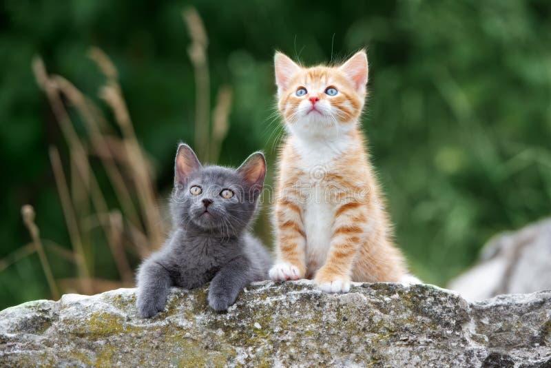 Zwei kleine Kätzchen, die draußen im Sommer aufwerfen lizenzfreie stockfotos