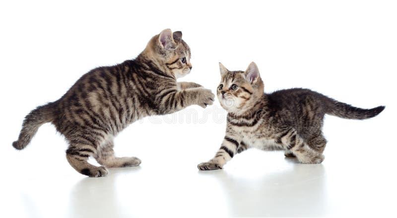 Zwei kleine Kätzchen, die zusammen spielen lizenzfreies stockbild