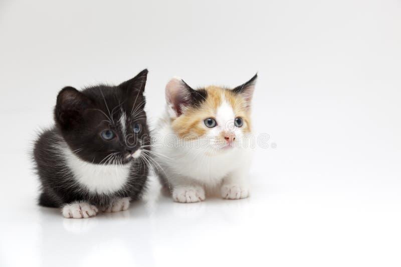 Zwei kleine Katzen stockfotos