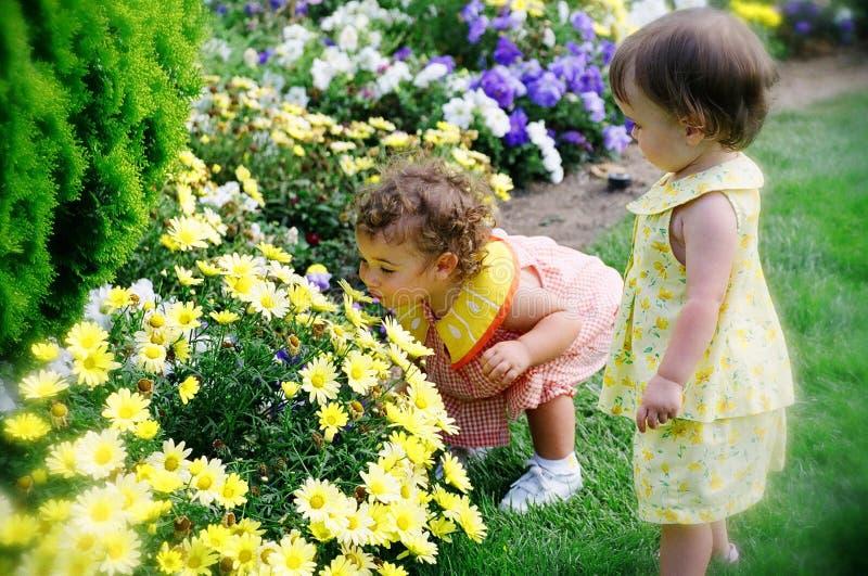 Zwei kleine Mädchen, die Blumen riechen lizenzfreie stockfotos