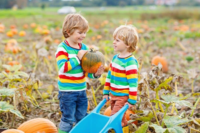 Zwei Kleinkindjungen, die Kürbise auf Halloween- oder Danksagungskürbis Flecken auswählen lizenzfreie stockfotografie
