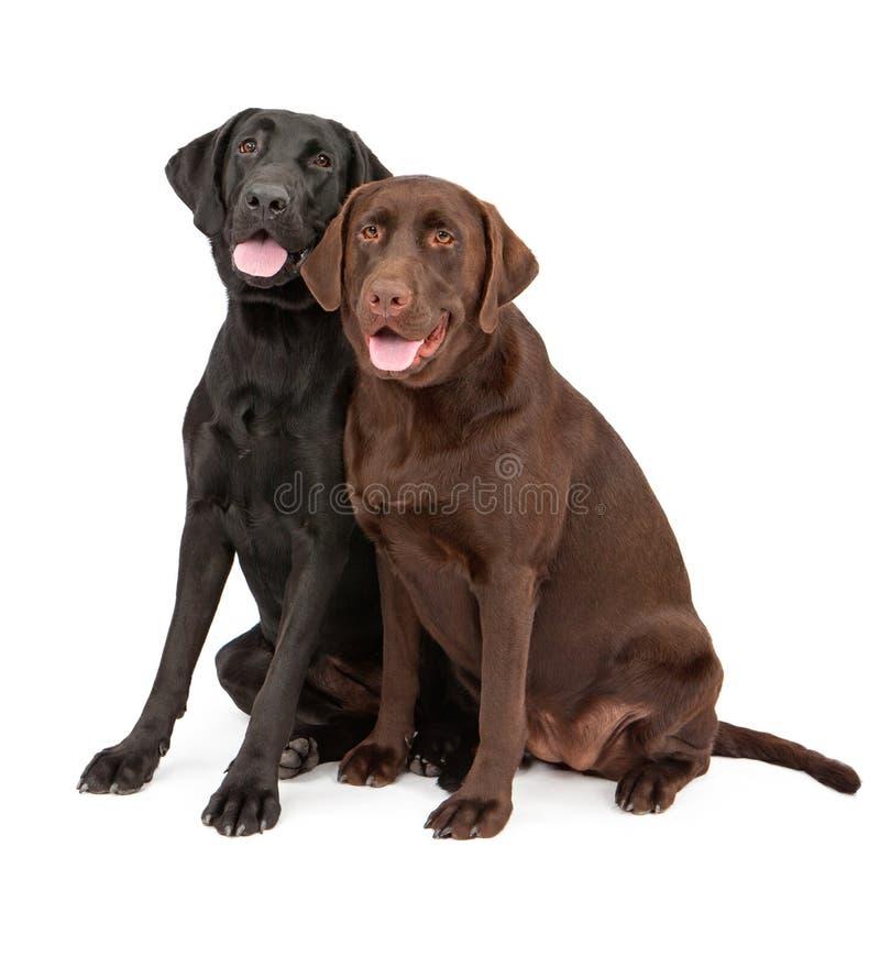 Zwei Labrador-Apportierhund-Hunde, die zusammen sitzen lizenzfreie stockfotografie