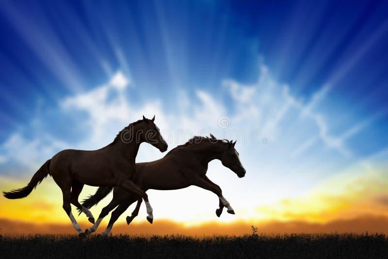 Zwei laufende Pferde lizenzfreies stockbild