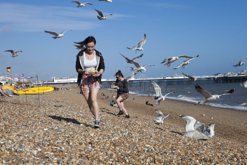 Zwei Mädchen mit Lebensmittel laufen weg von Möven, die sie auf dem Strand in Angriff nehmen stockfotografie