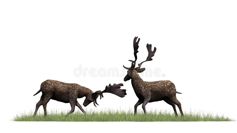 Zwei männliche Rotwild im grünen Gras lizenzfreie abbildung