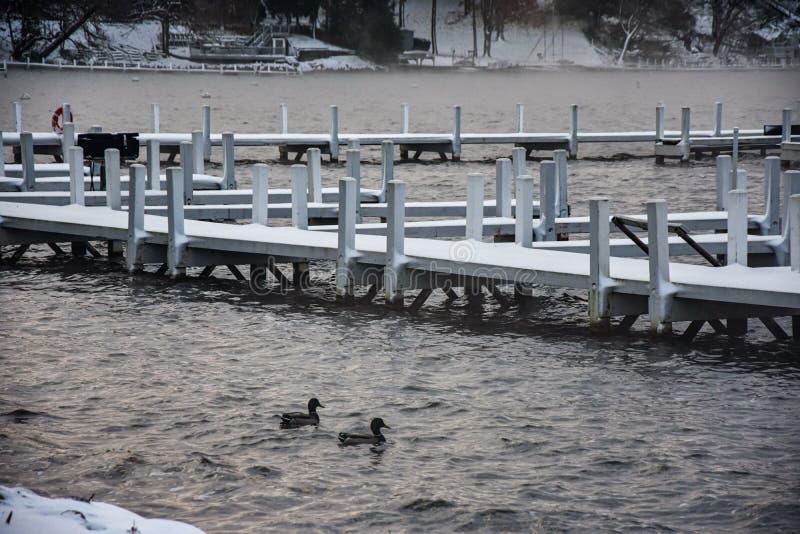 Zwei Mallard-Enten in einem kalten See mit Schnee auf Piers lizenzfreie stockfotografie