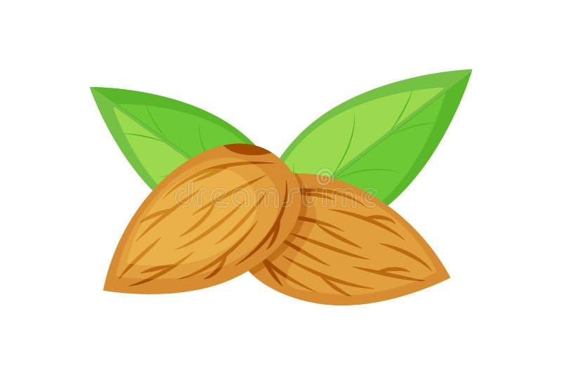 Zwei Mandelnüsse mit der grünen Blattvektorillustration lokalisiert auf weißem Hintergrund Nuts Samen vektor abbildung