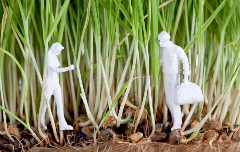 Zwei menschliche Abbildungen in den Weizensprößlingen lizenzfreie stockbilder