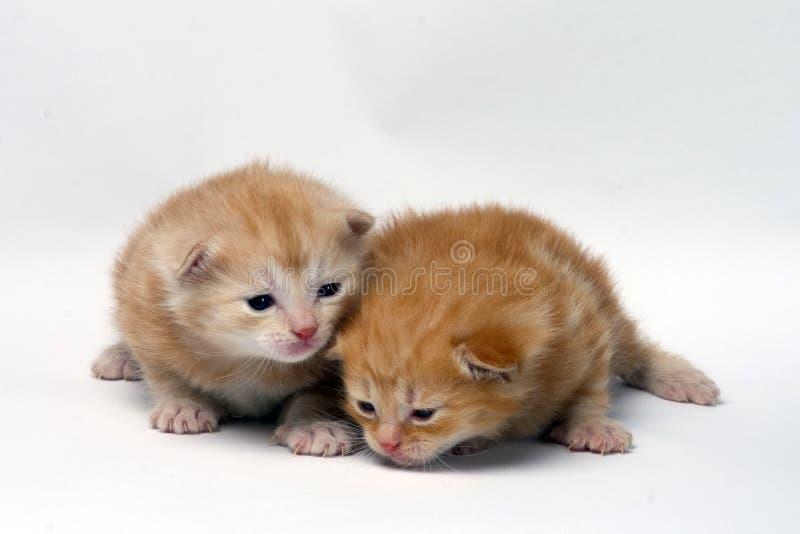 Zwei Miezekatzen lizenzfreie stockbilder