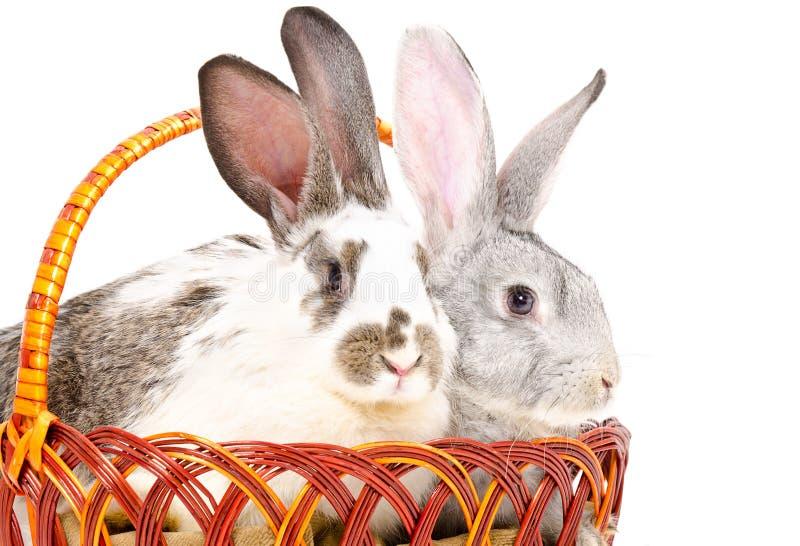 Zwei nette Kaninchen, die in einem Korb sitzen lizenzfreie stockfotografie