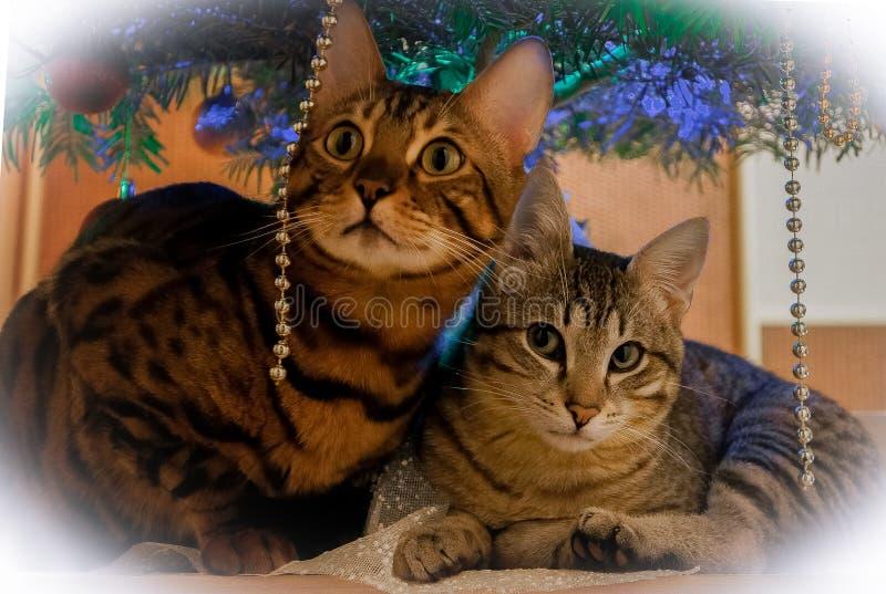 Zwei nette Katzen unter dem Baum des neuen Jahres stockbild