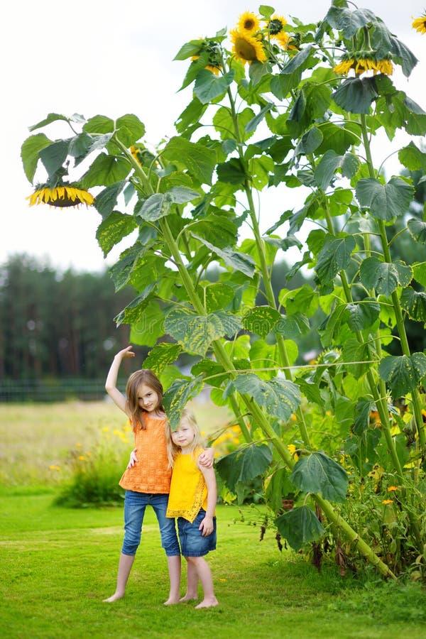 Zwei nette kleine Mädchen, die riesige Sonnenblumen bewundern lizenzfreie stockfotografie