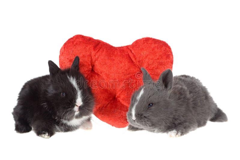 Zwei nette Schätzchenkaninchen mit roten Inneren stockfoto