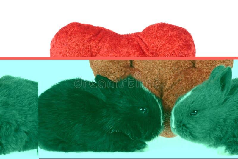 Zwei nette Schätzchenkaninchen mit roten Inneren stockfotografie