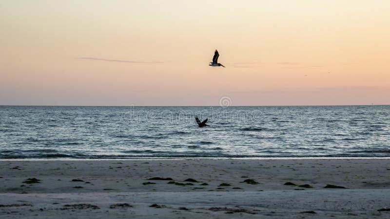 Zwei Pelikane jagen über dem Golf von Mexiko, während die Sonne zu s anfängt lizenzfreies stockfoto