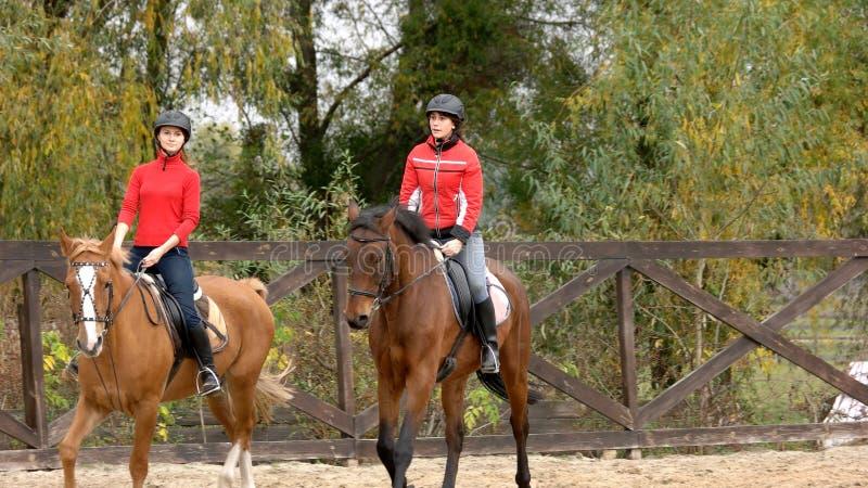 Zwei Pferde der jungen Frauen Reit lizenzfreies stockfoto