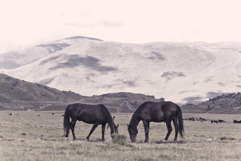 Zwei Pferde, die auf Alpenwiese, Stellung, vertraulich weiden lassen stockfotografie