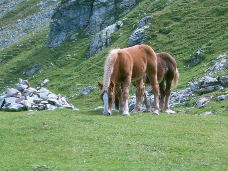 Zwei Pferde, die Gras auf dem Berg essen stockbild