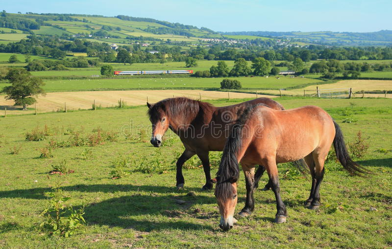 Zwei Pferde lassen auf einem Ackerland weiden stockfotografie