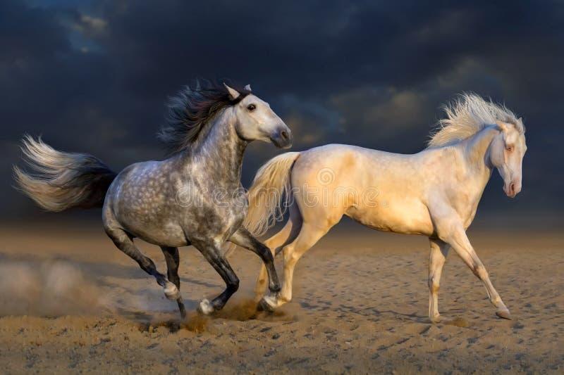 Zwei Pferdespiel lizenzfreie stockbilder
