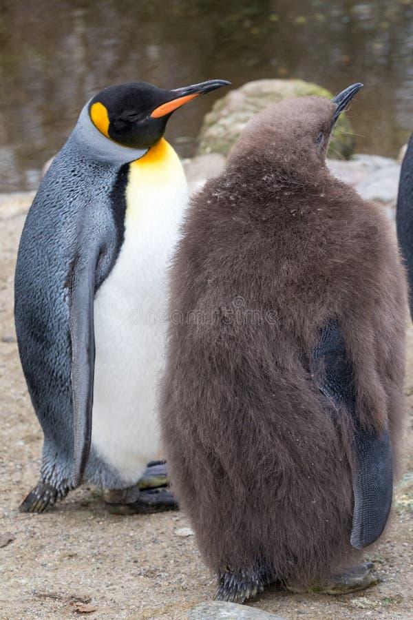Zwei Pinguine und eine Sitzung lizenzfreies stockbild